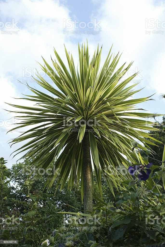 Small Palm Tree with blue flower royalty-free stock photo