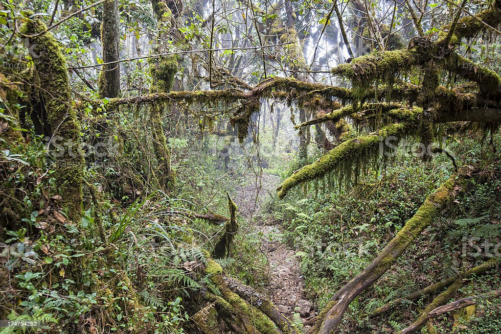 small path in a tropical dense cloud forest stock photo