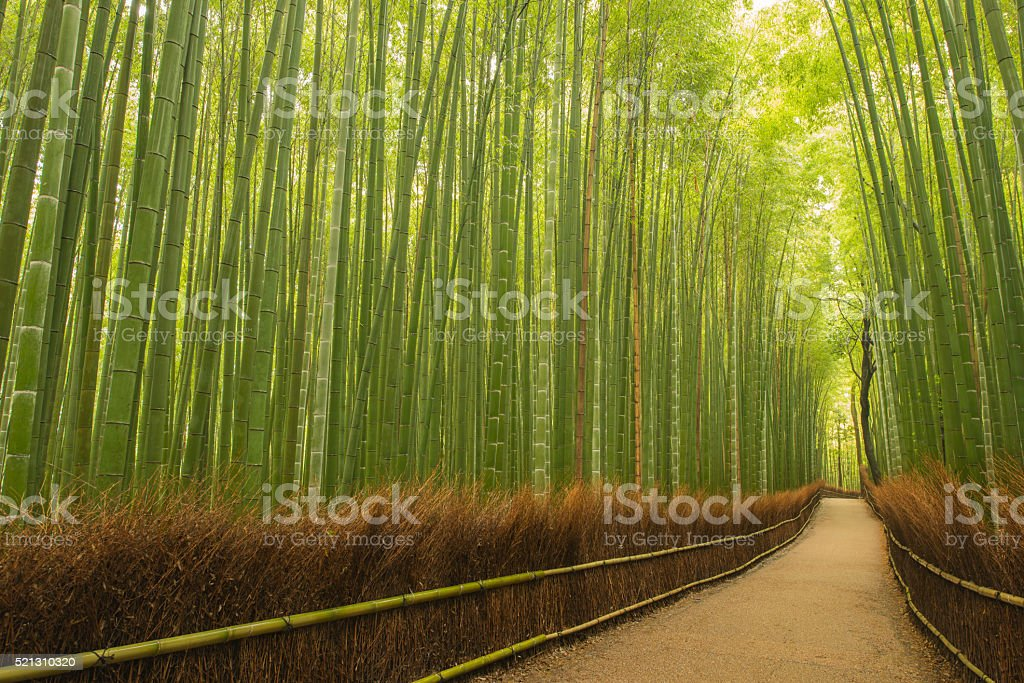 Small path in bamboo forest, Kyoto, Japan stock photo