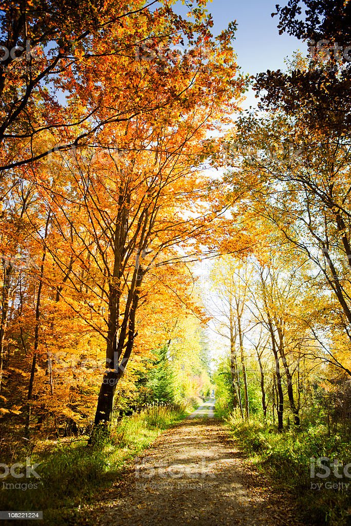 Small Path Surrounded by Autumn Trees in Forest royalty-free stock photo