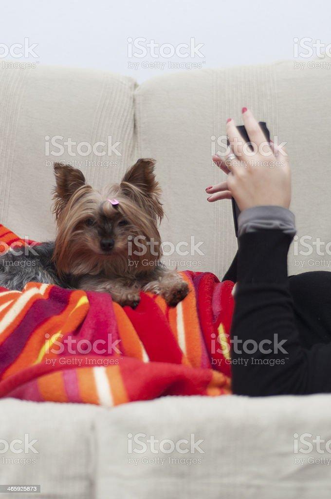 Small pet lies next his master royalty-free stock photo