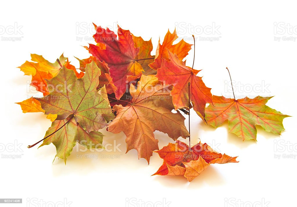Small pile of autumn leaves isolated on white royalty-free stock photo
