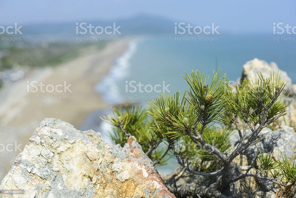 Small pine tree on The mountain rock stock photo