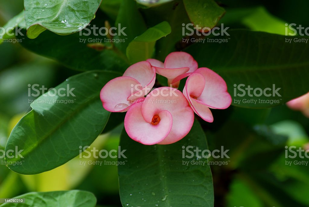 small pink flower royalty-free stock photo