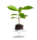 Small plant and soil on white background. Safe tree concept