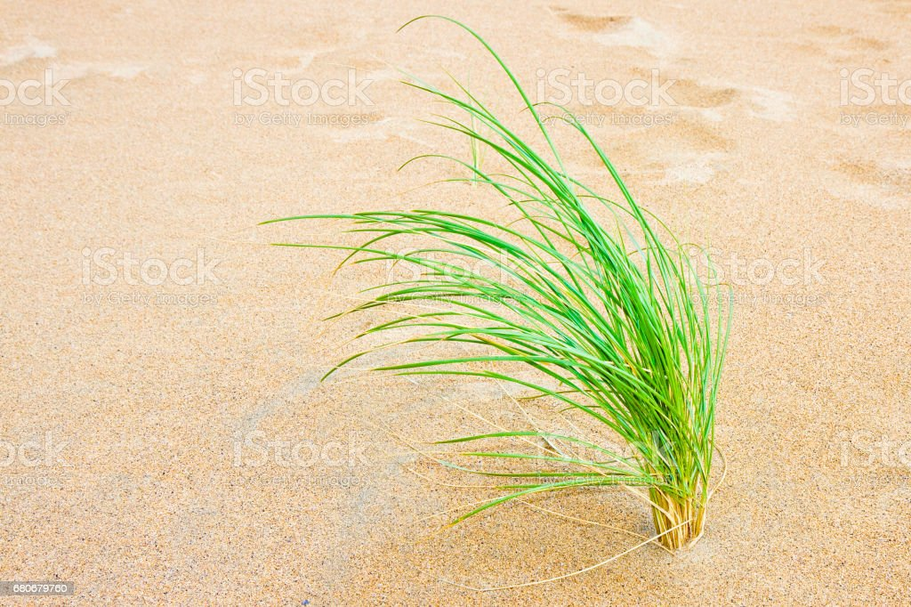 Small plant born on sand - New life concept image stock photo