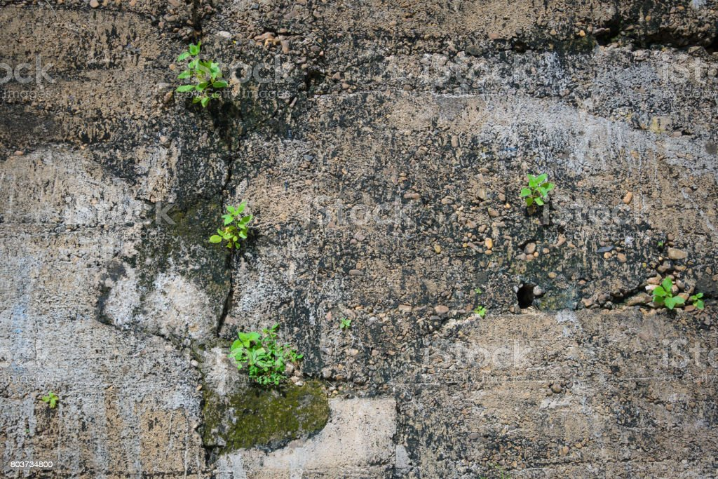 Small plant growing in  wall stock photo