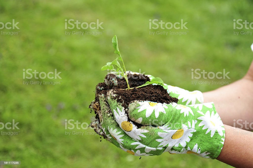 Small plant growing royalty-free stock photo