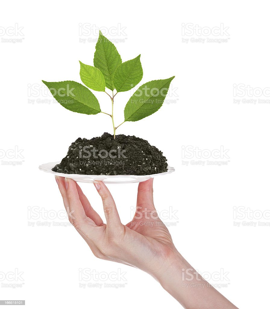 small plant in earth on plate royalty-free stock photo