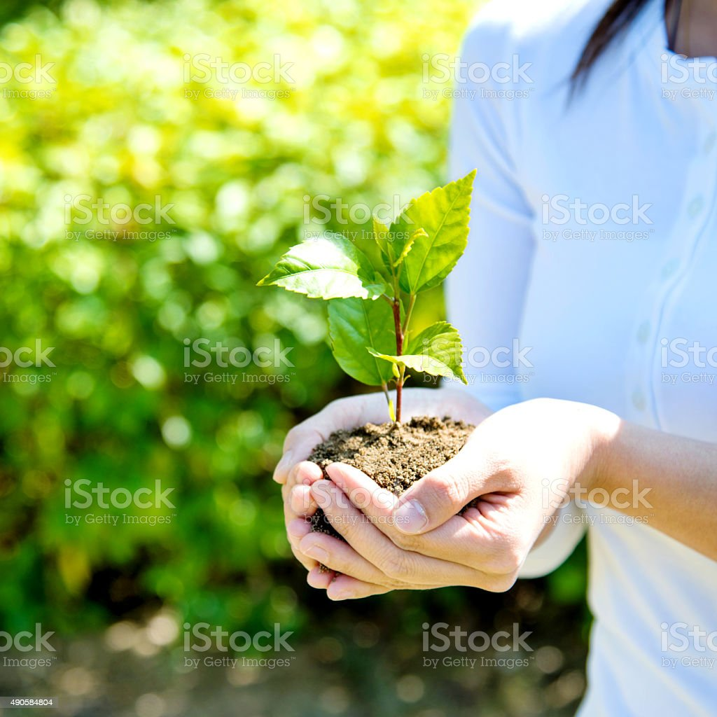 small plant in hands stock photo