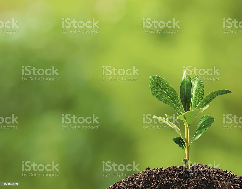 Small plant on pile of soil stock photo