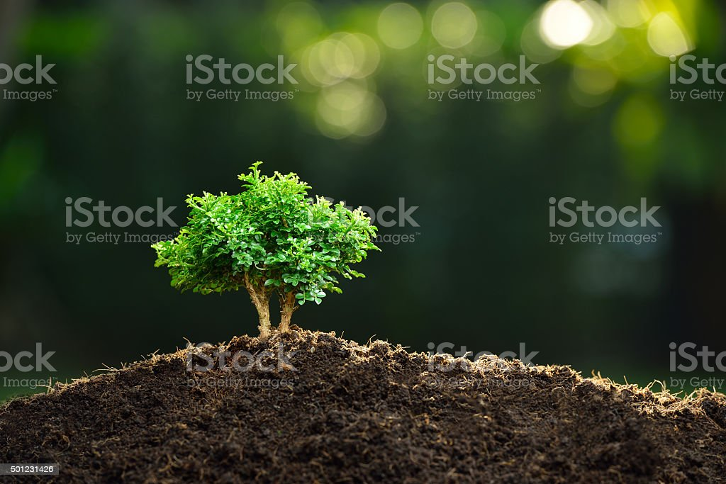 Small plant stock photo