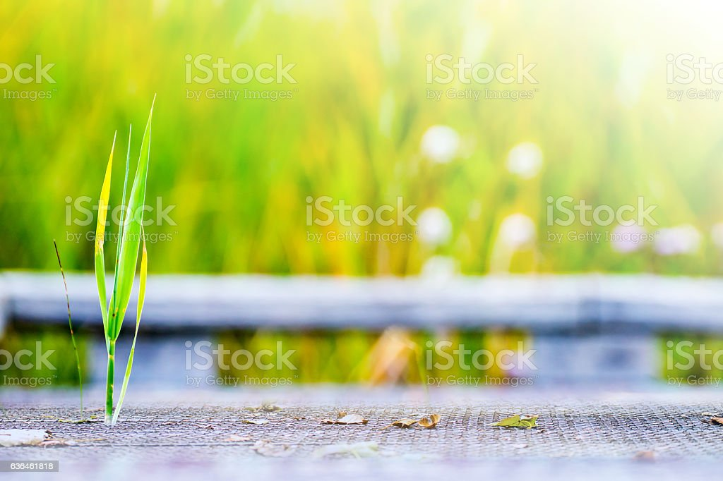 Small plant succeeds to grow through wooden plank on floor stock photo