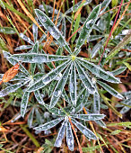Small plant with dew drops
