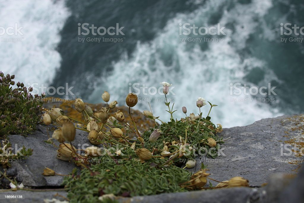 Small Plants by Ocean stock photo