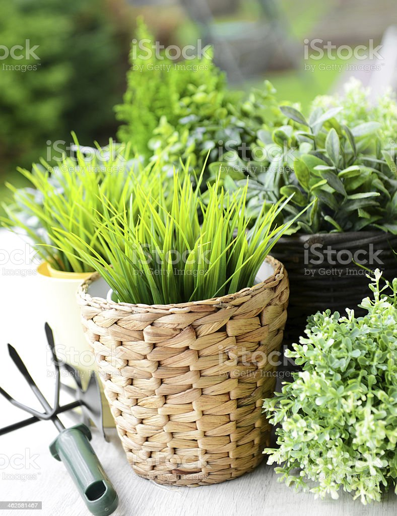 Small plants growing in woven basket pots royalty-free stock photo