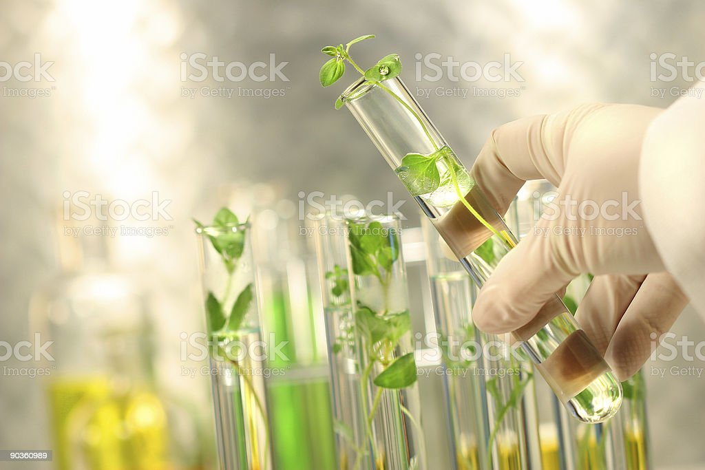 Small plants in test tubes stock photo