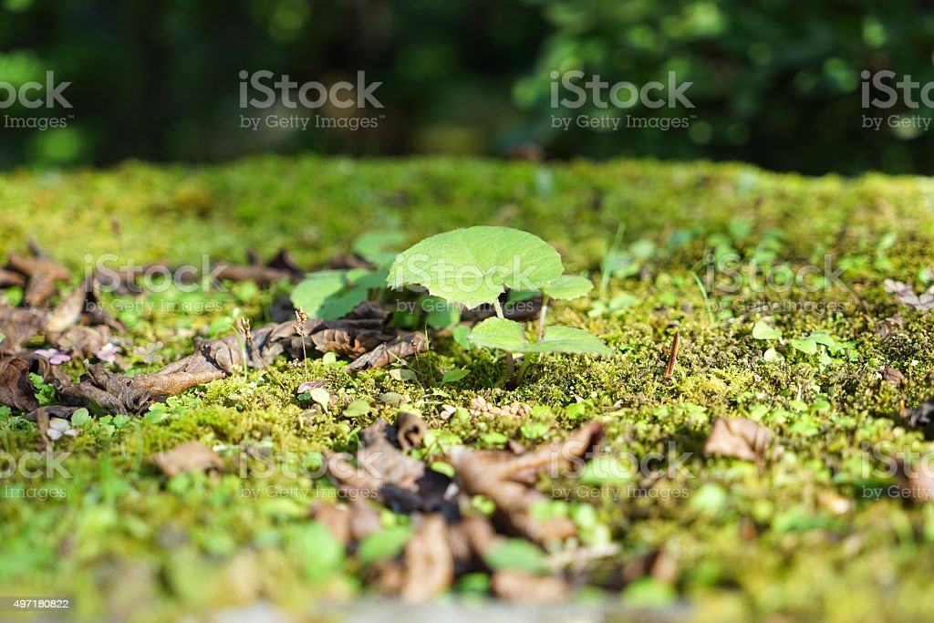 Small Plants on the Ground stock photo