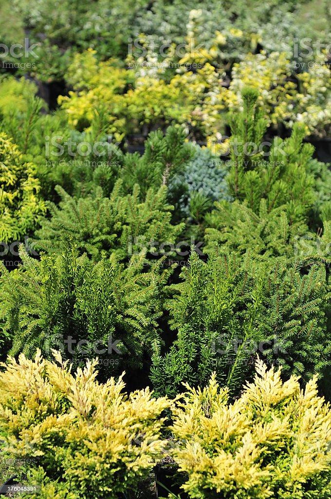 Small plants royalty-free stock photo