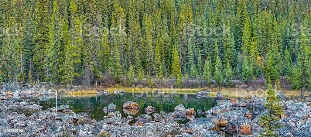 Small pond in forest stock photo