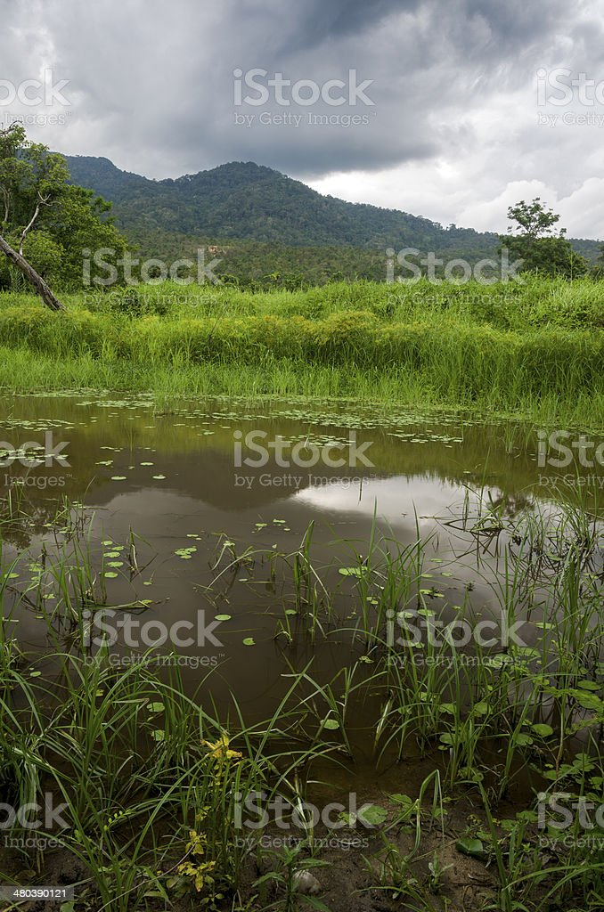 Small pond in swampland royalty-free stock photo