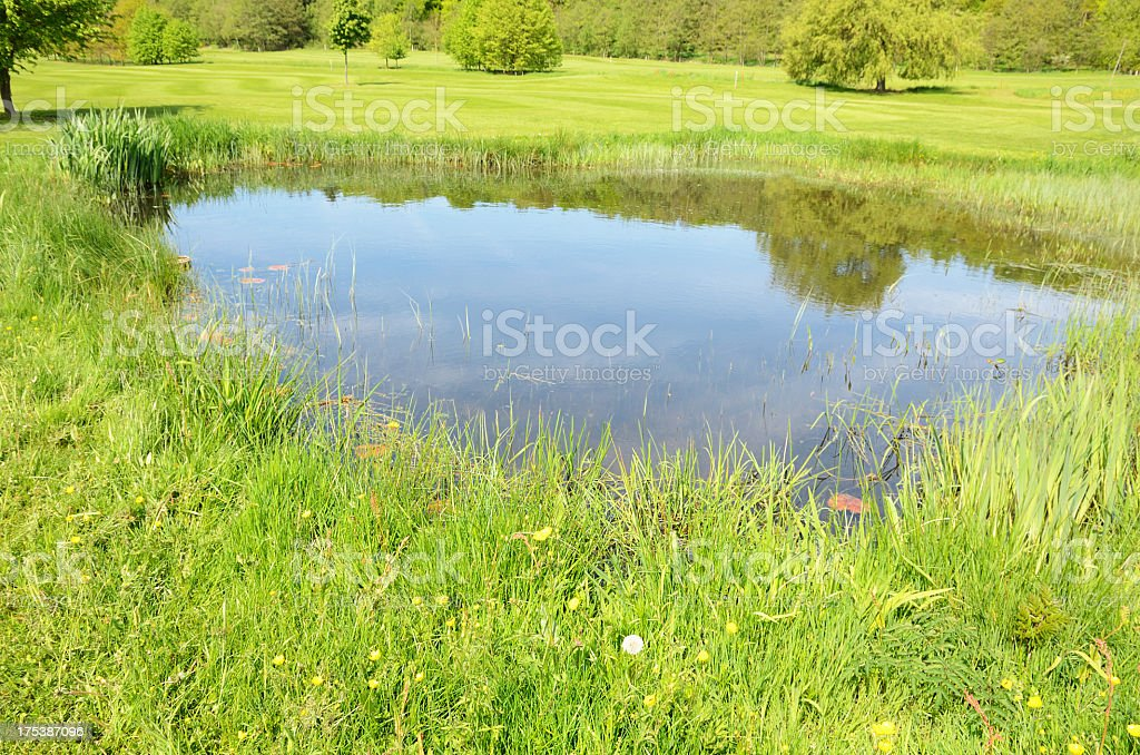 Small pond in the middle of a green field with long grass stock photo