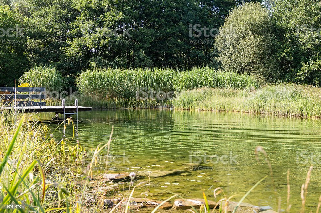 Small Pond stock photo
