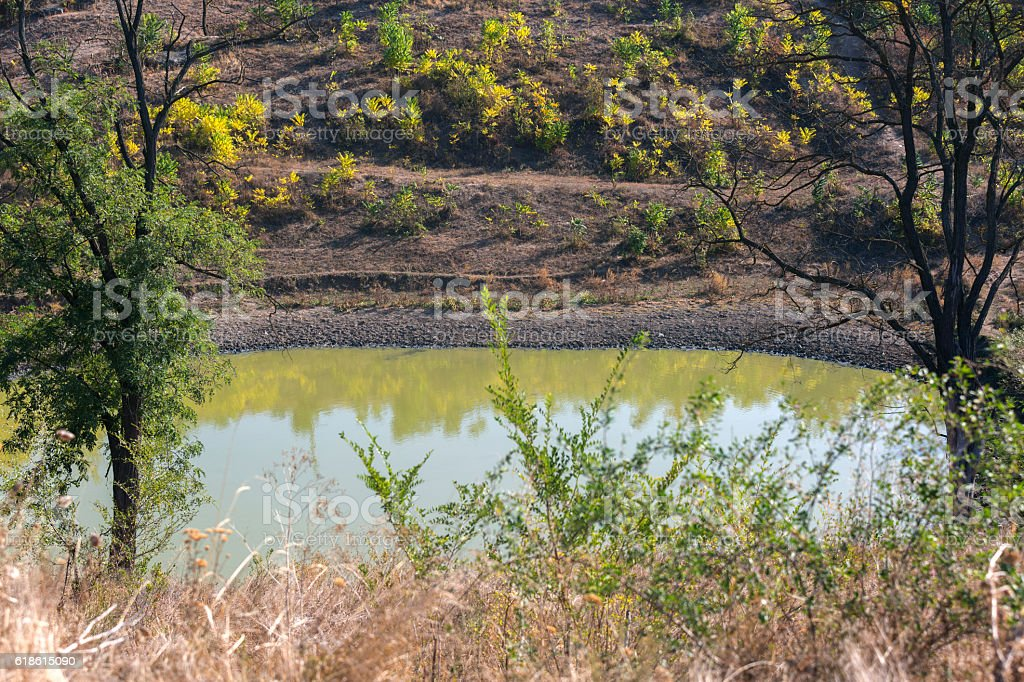 Small pond with water covered with duckweed stock photo
