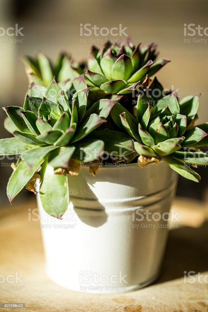 Small pot in a white bucket stock photo