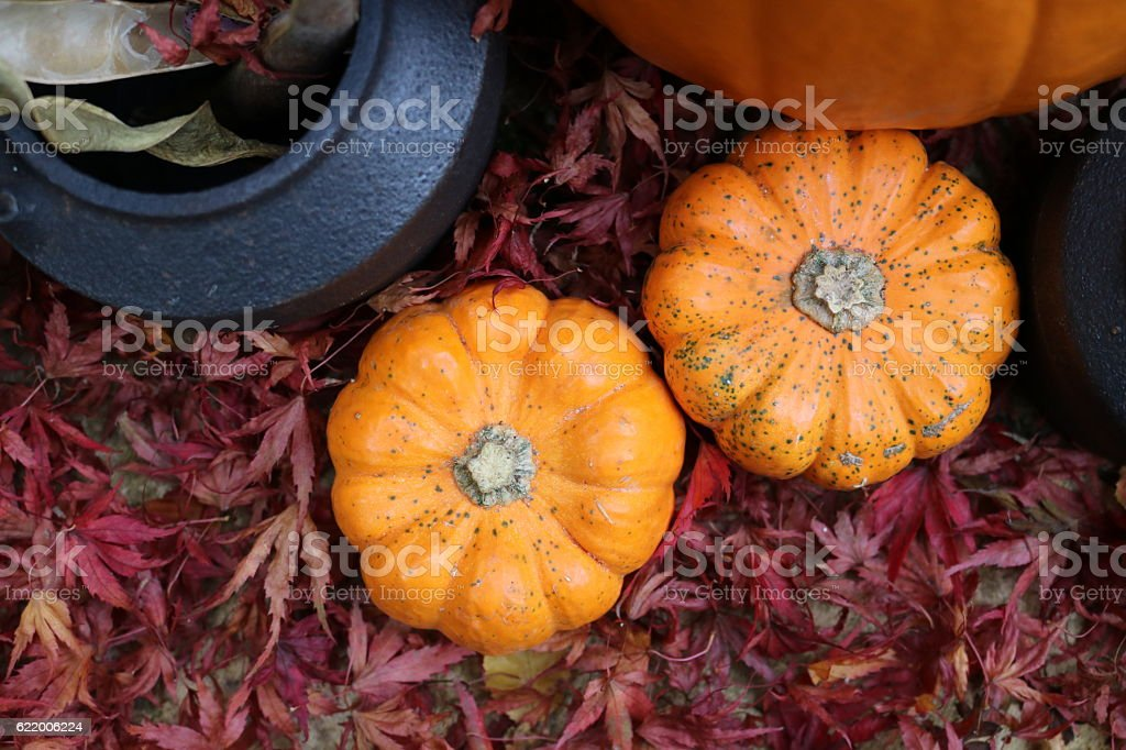 Small pumpkins and cauldron from above in red leaves stock photo