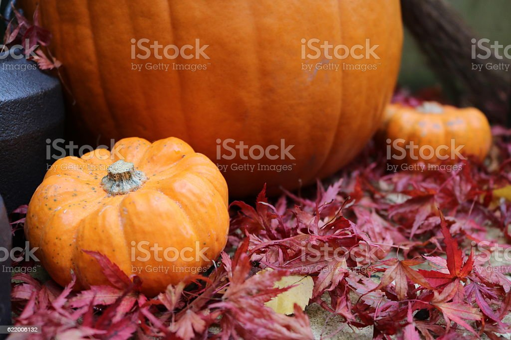 Small pumpkins framing large pumpkin in leaves stock photo