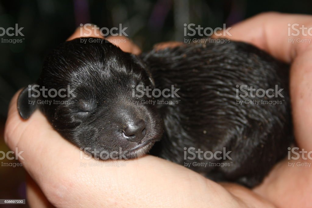 small puppy stock photo