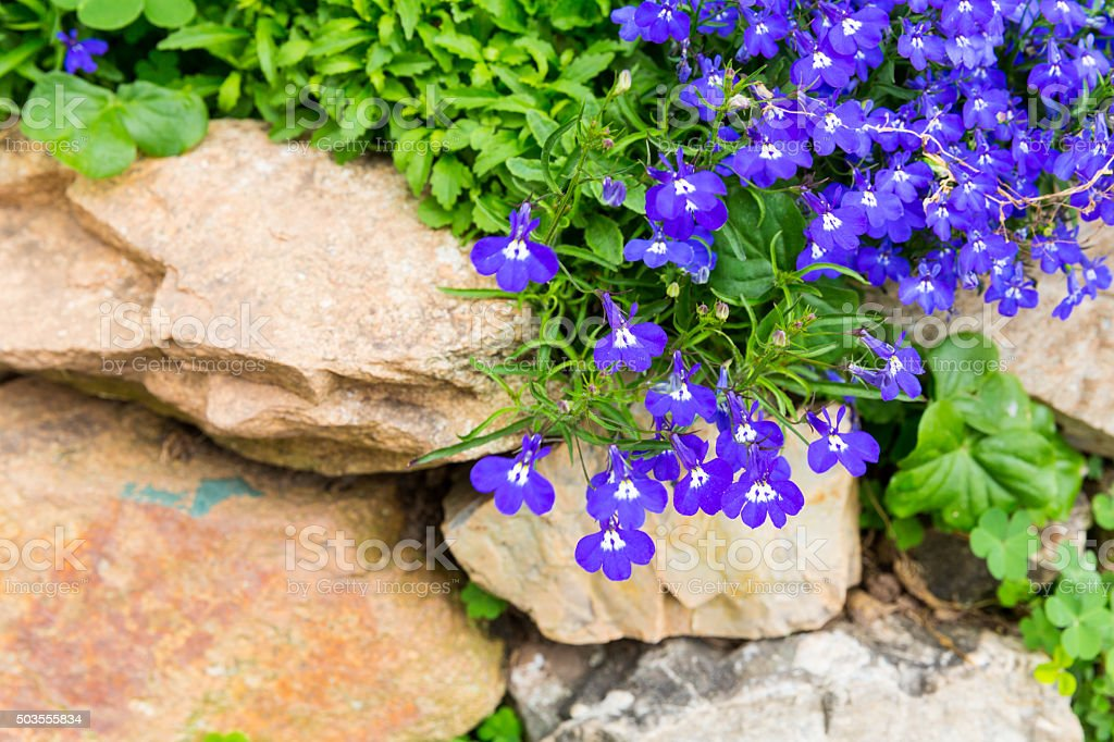 Small purple flower decorate on stone stock photo