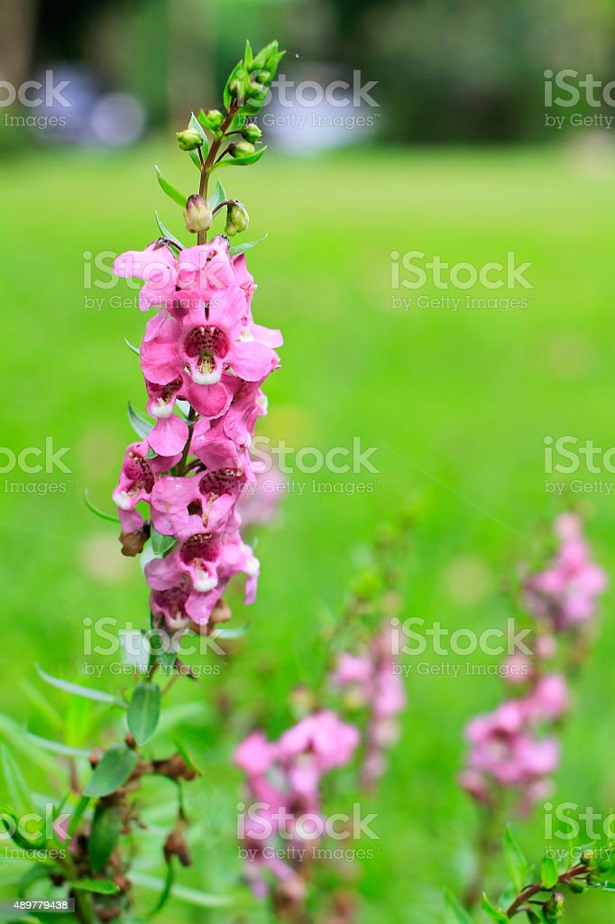 Small Purple flower in the morning light stock photo