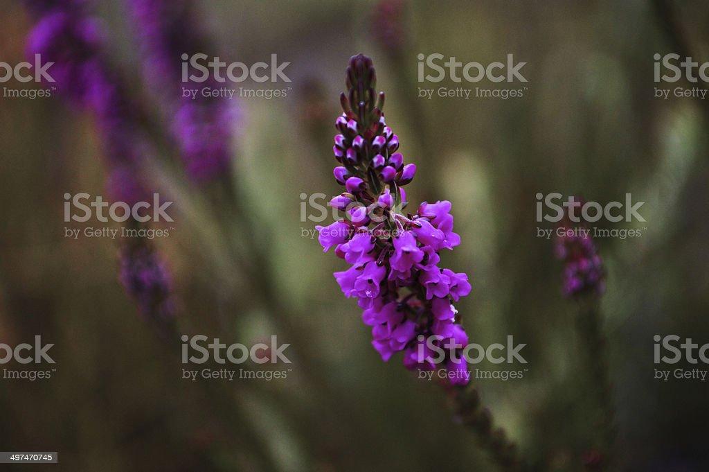 Small, purple flower. stock photo
