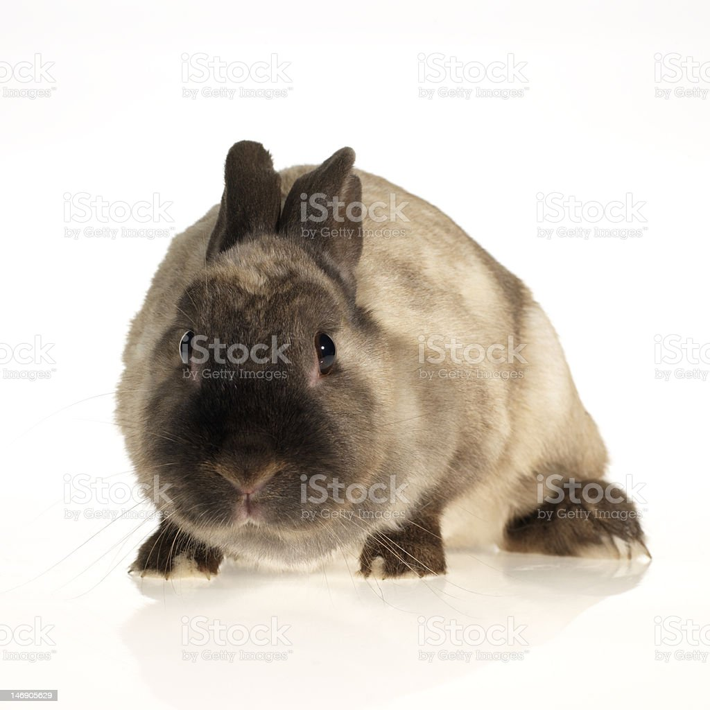 small rabbit beiing afraid stock photo