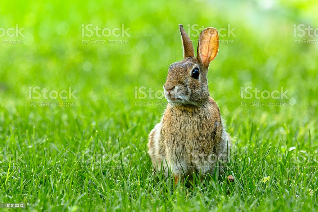 Small Rabbit stock photo