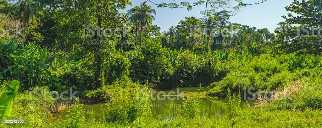 Small river in bright tropics of Thailand stock photo