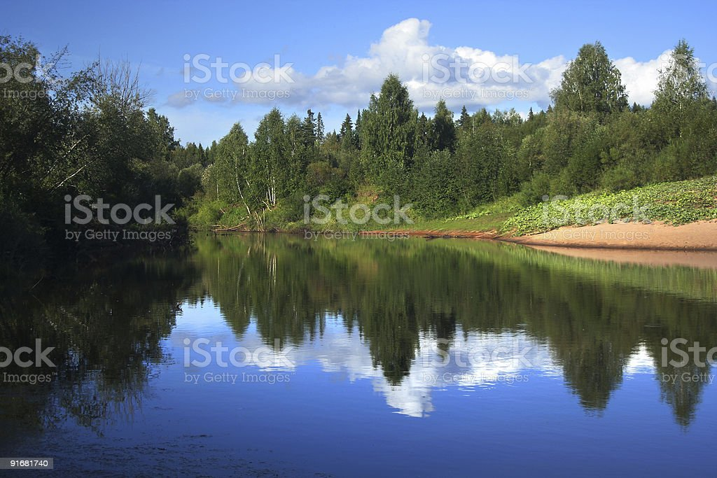 Small river in forest royalty-free stock photo