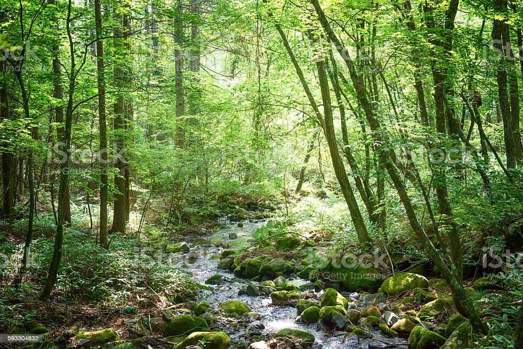 Small river in the forest stock photo