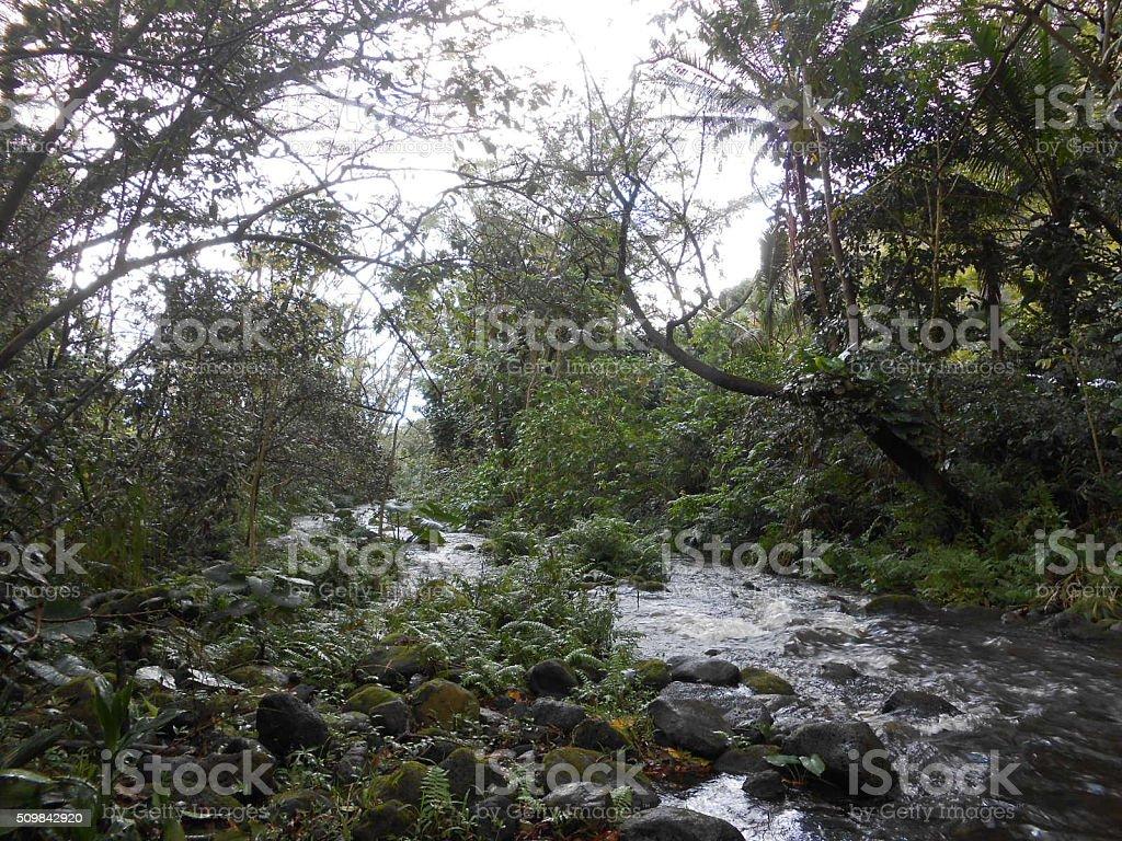 Small River in Waipio Valley on Big Island, Hawaii. stock photo