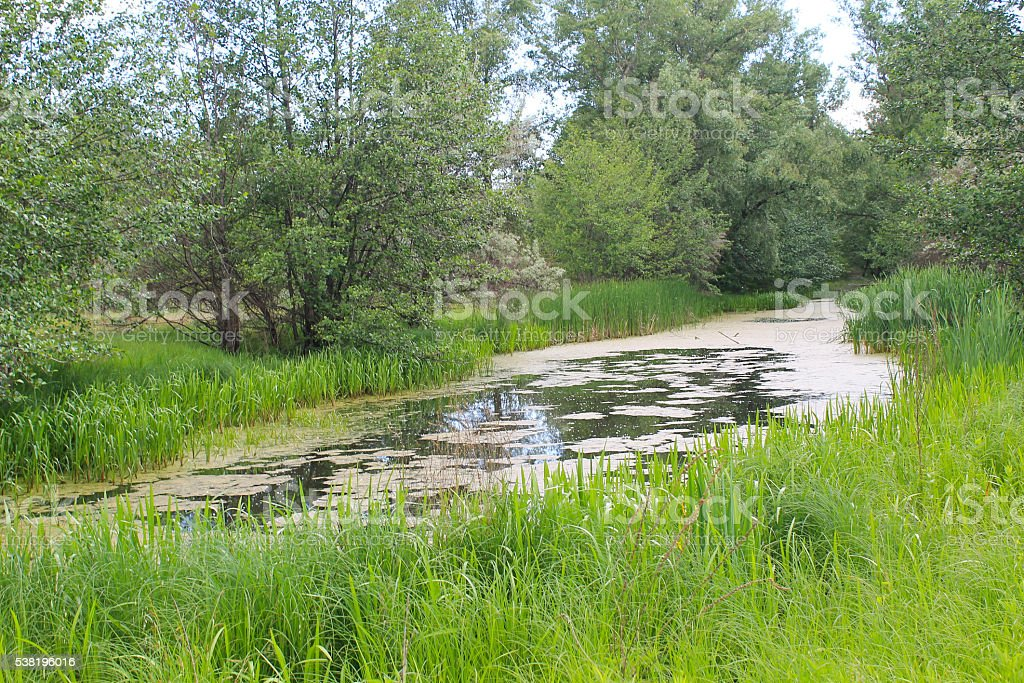 Small river overgrown with duckweed stock photo