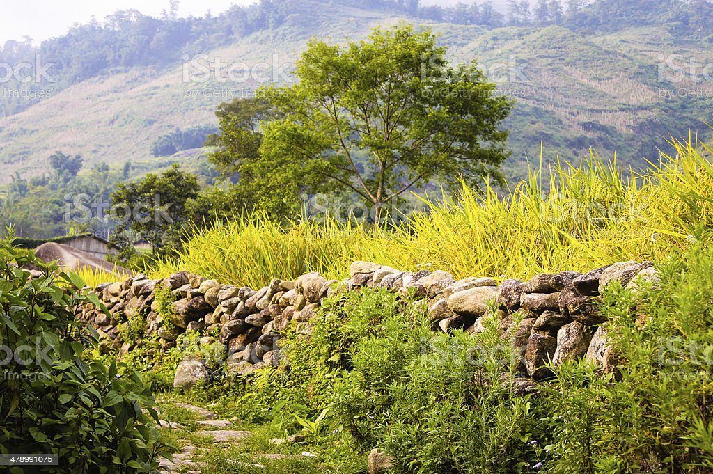Small road in rice field in Sapa town - Vietnam royalty-free stock photo