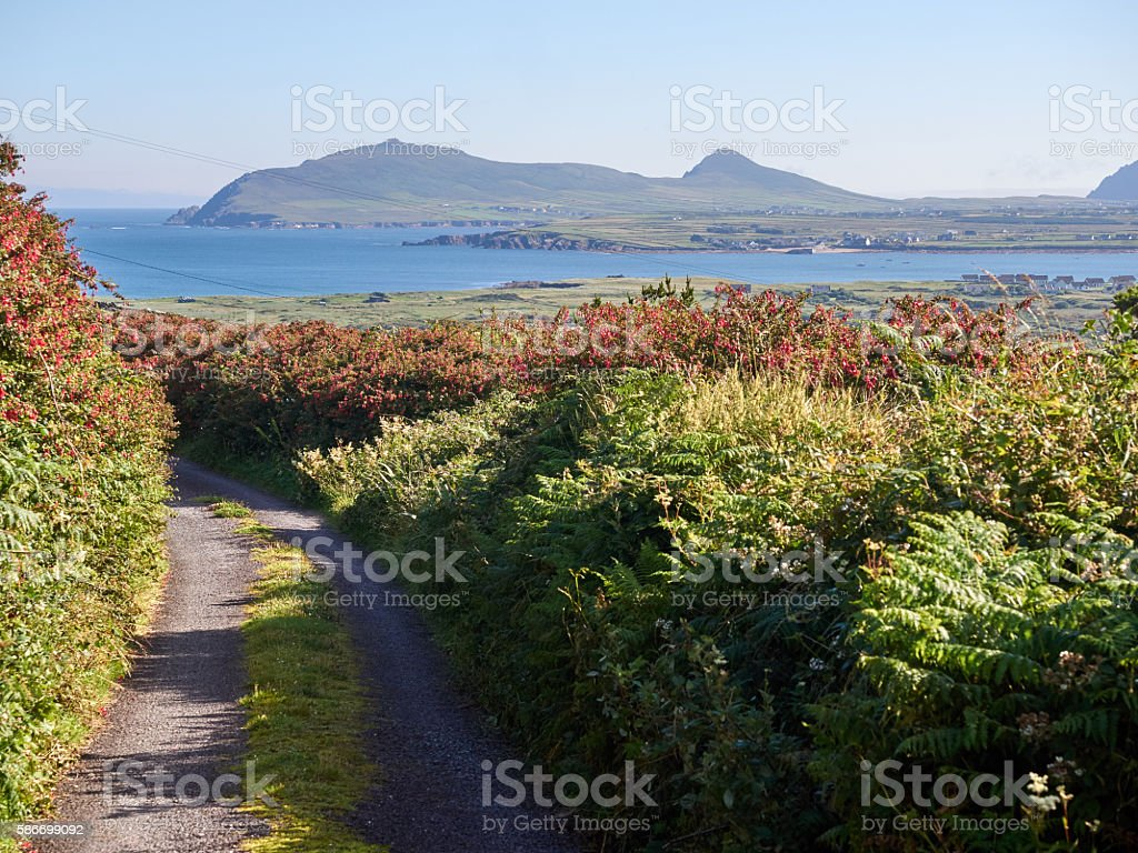 Small road leading to the sea in Dingle, Ireland stock photo