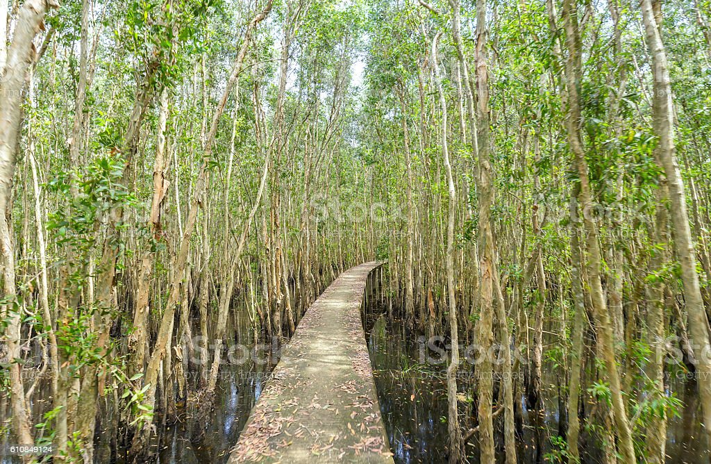 Small road through the melaleuca forests stock photo