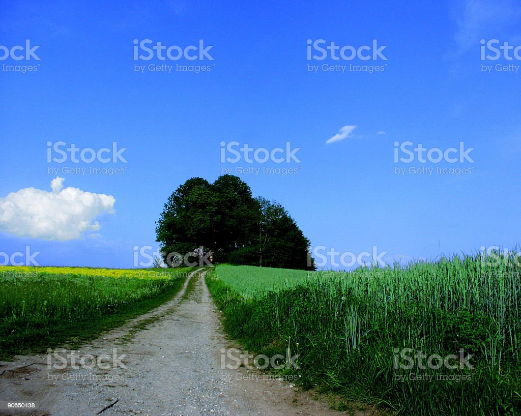 Small road through the wheat field royalty-free stock photo