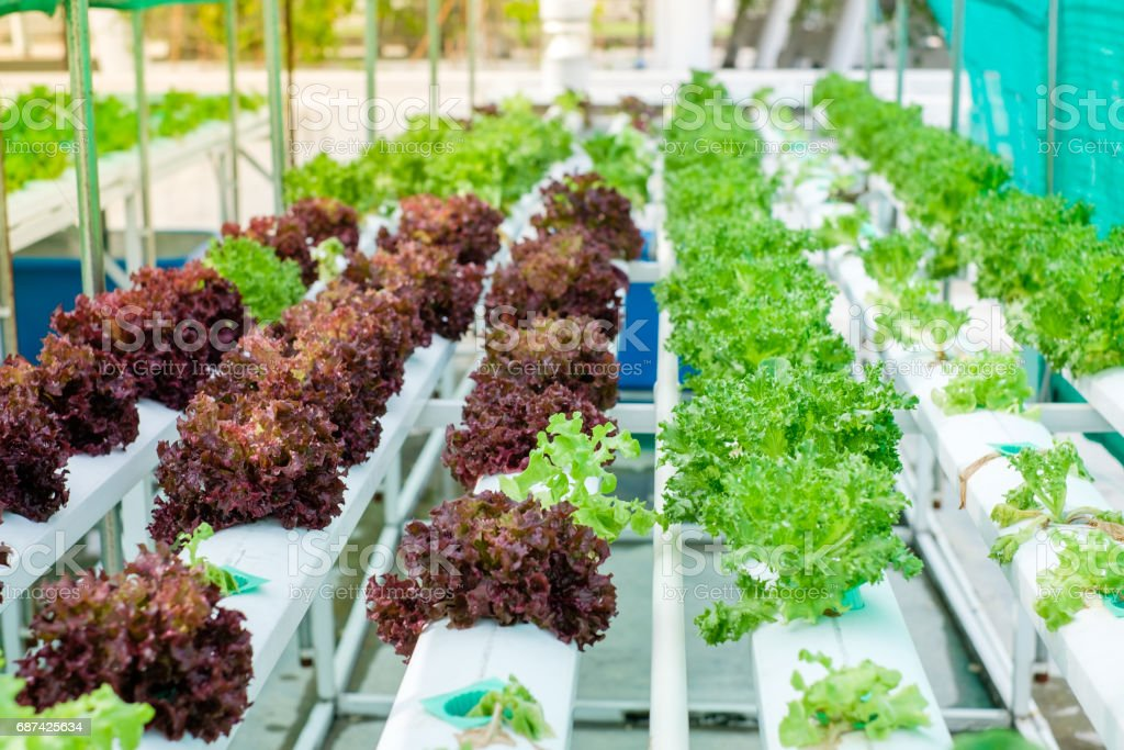 Small Rooftop Hydroponic Farming stock photo