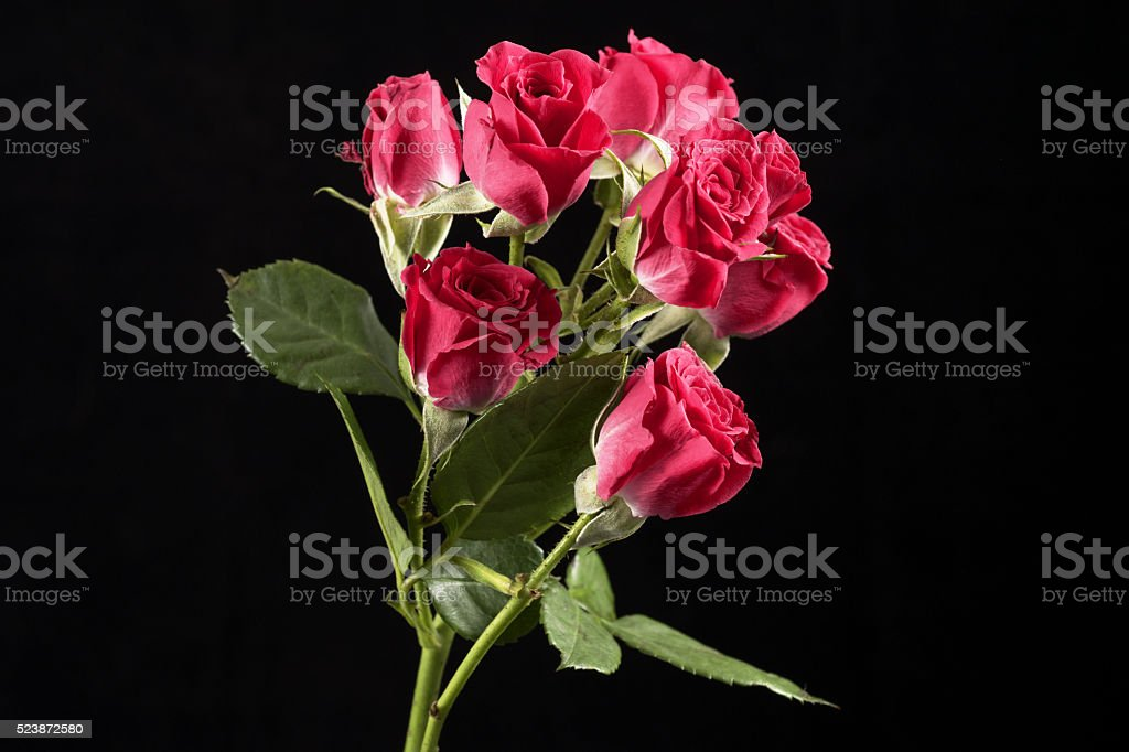Small roses close up stock photo