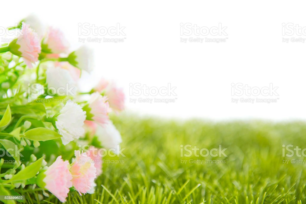 Small roses on grass isolated stock photo