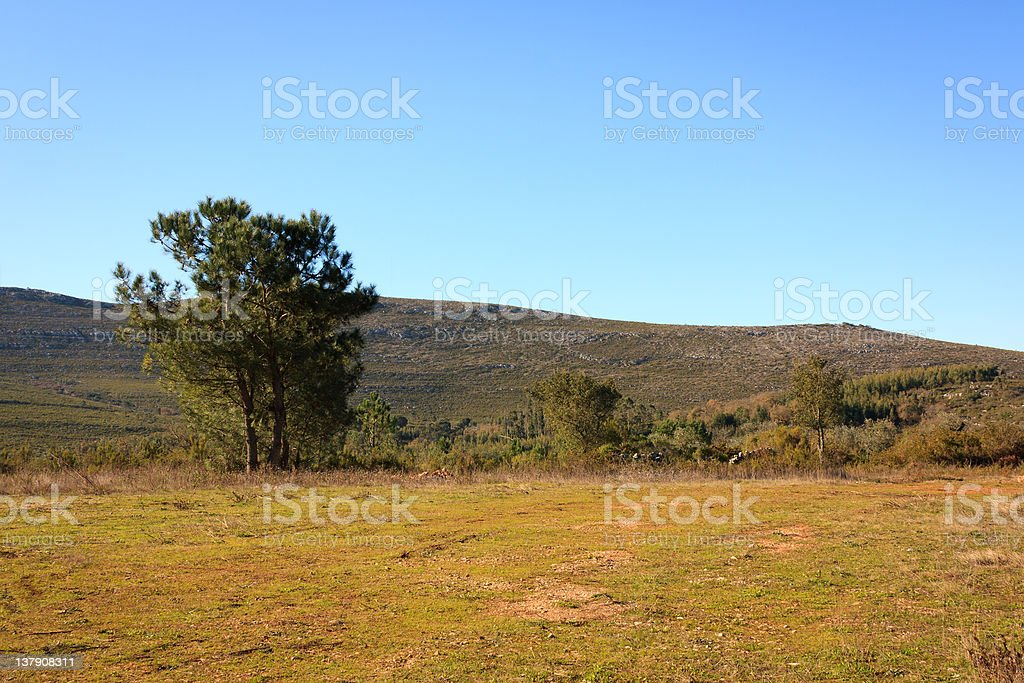 Small Rural Field royalty-free stock photo